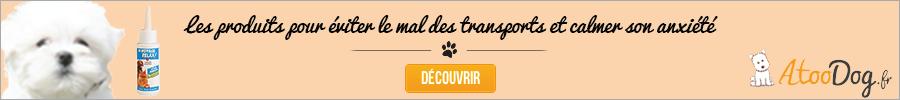 bichon-maltais-atoodog-mal-des-transports