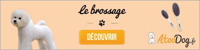 toilettage-du-bichon-maltais-atoodog-1