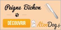 toilettage-du-bichon-maltais-atoodog-2
