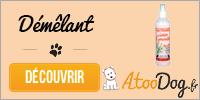 toilettage-du-bichon-maltais-atoodog-3