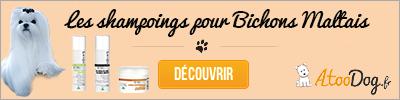 toilettage-du-bichon-maltais-atoodog-4