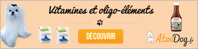toilettage-du-bichon-maltais-atoodog-5