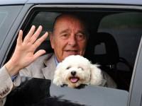 Jacques Chirac et son Bichon Maltais